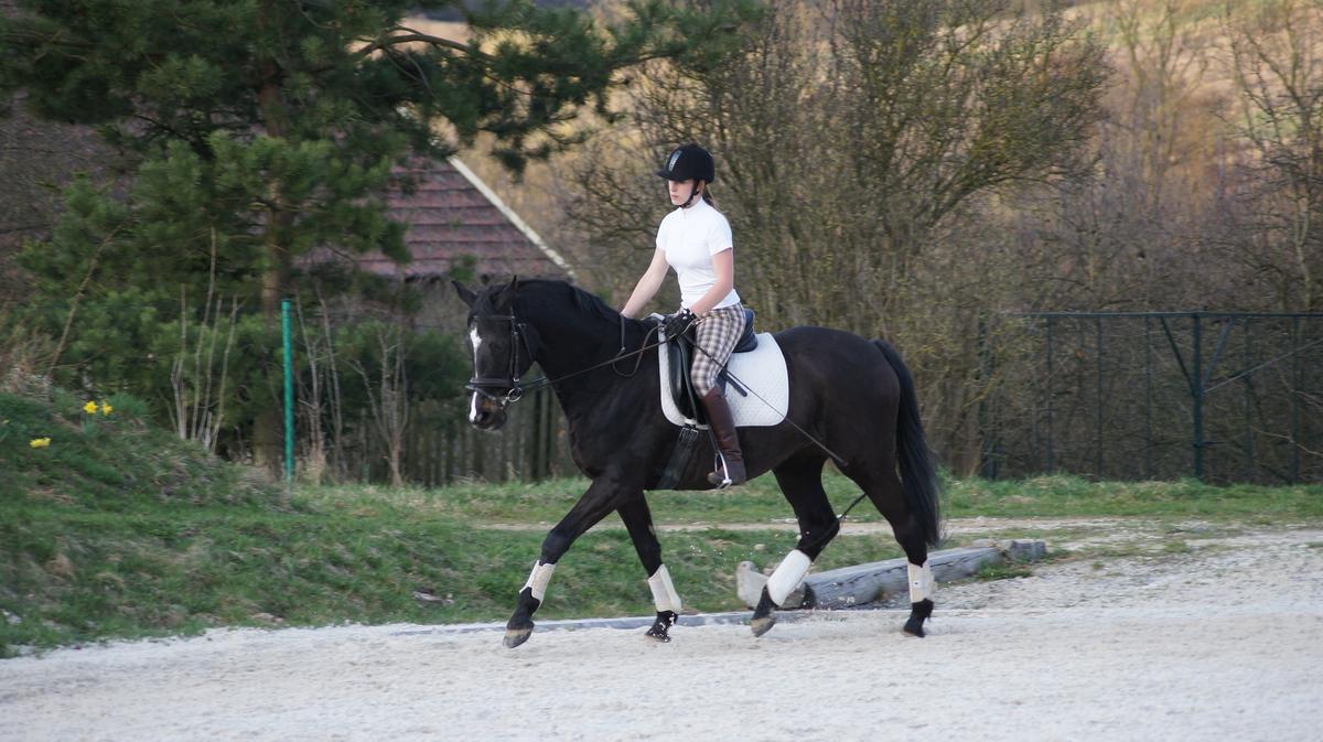 >Школа верховой езды Horse and Rider