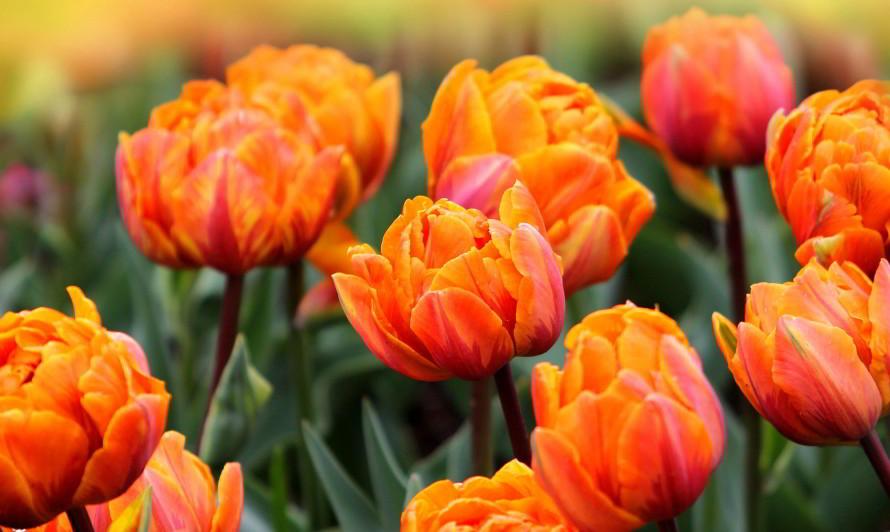 Выставка тюльпанов в Дендрологическом саду