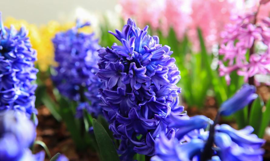 Начало весны в Королевском саду 7